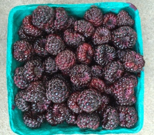 black raspberries. not just for ice cream. and DIFFERENT than blackberries.